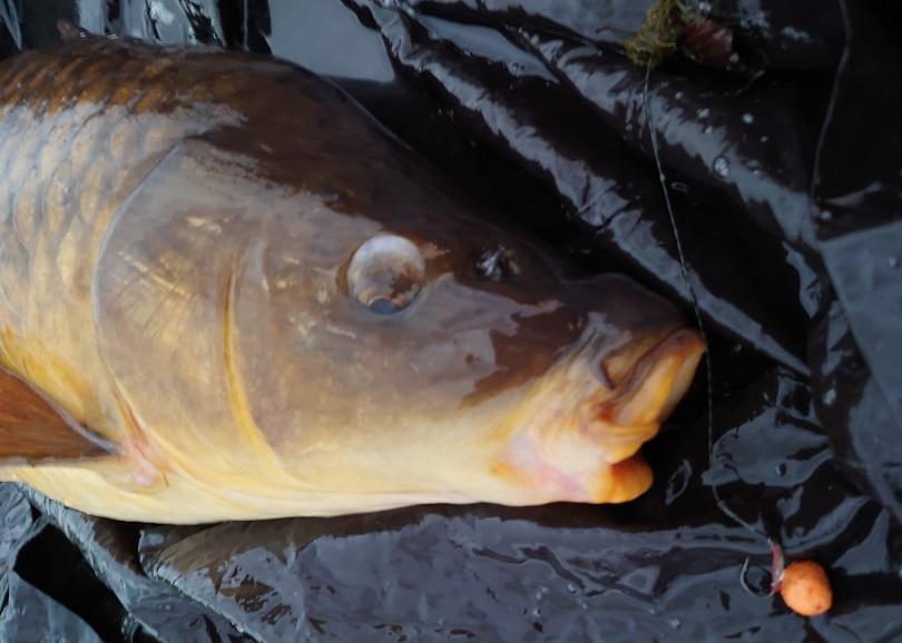 James Salmons banks another <b>Chunk</b>! | News | Korda